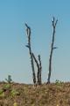 171015 D2X - Fischbeker Heide 8486.jpg