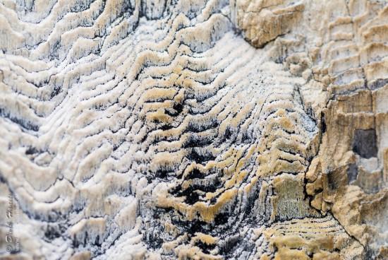 Nahaufnahme eines fossilierten Baumes