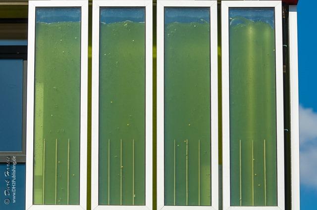 Ein vierteiliges Fassadenelement mit Algen
