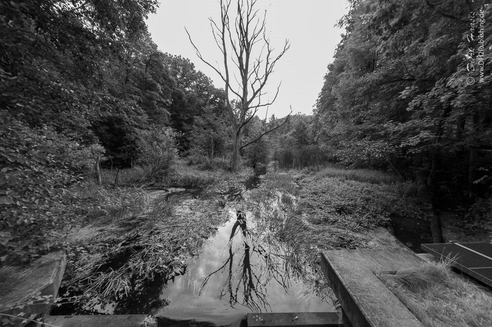 Abgestorbener Baum im Fluss inmitten laubtragender Bäume [b/w]