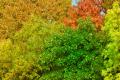 081010 - D2X Herbst 1460