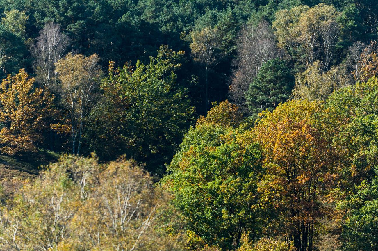 171015 D2X - Fischbeker Heide 8396.jpg