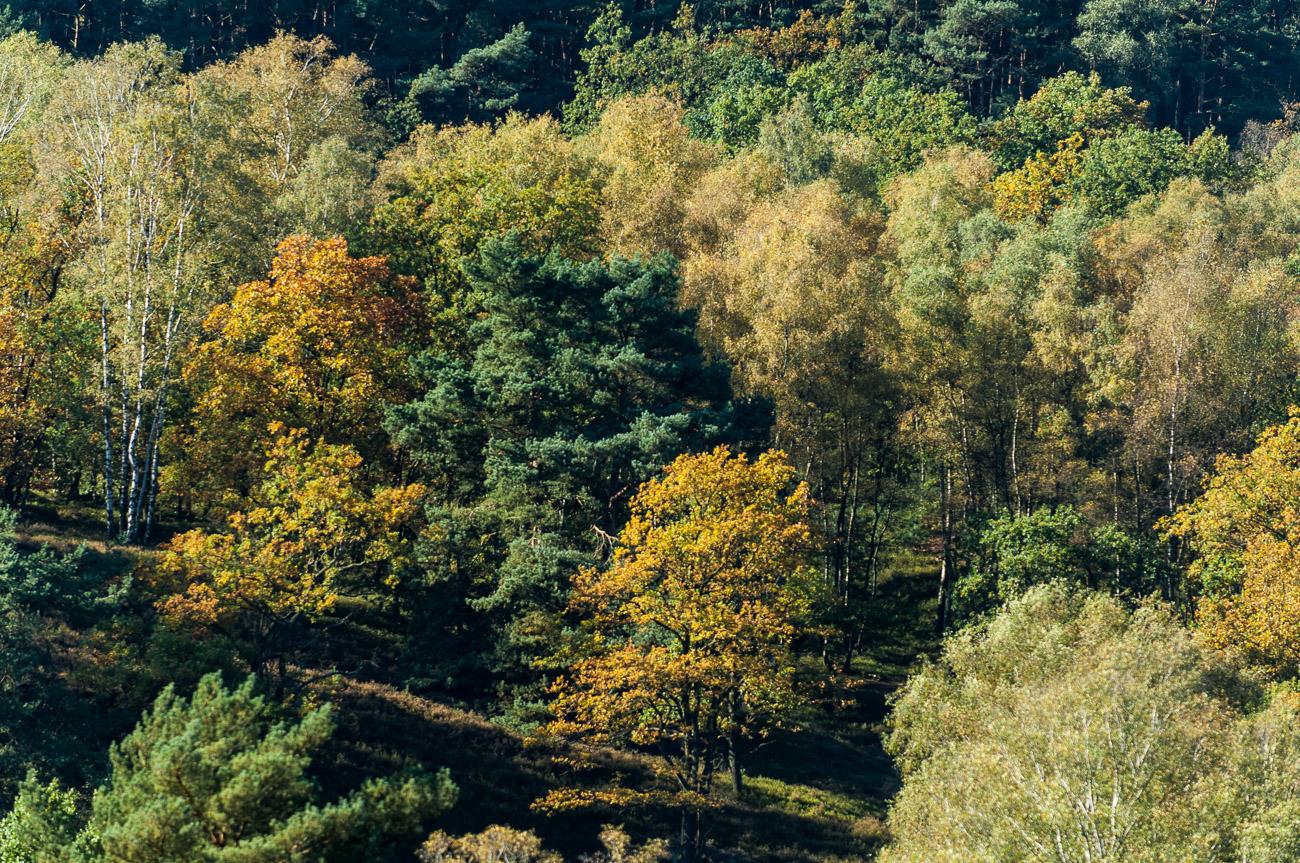 171015 D2X - Fischbeker Heide 8402.jpg