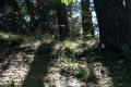 171015 D2X - Fischbeker Heide 8416.jpg