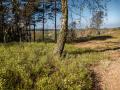 171015 Nexus 6P - Fischbeker Heide 130345.jpg